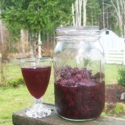 Homemade Blackberry Liqueur || It's easy to make your own fruit ...