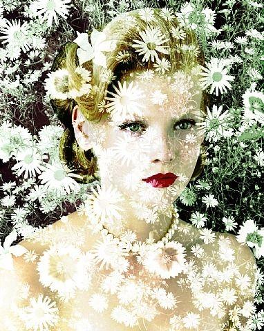Nerium Oleander (Blak-Eyed Susan) van Valérie Belin