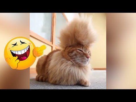أفضل فيديو مضحك عن الحيوانات اتحداك ان لا تضحك 2018 9 Youtube Funny Gif Animals Funny
