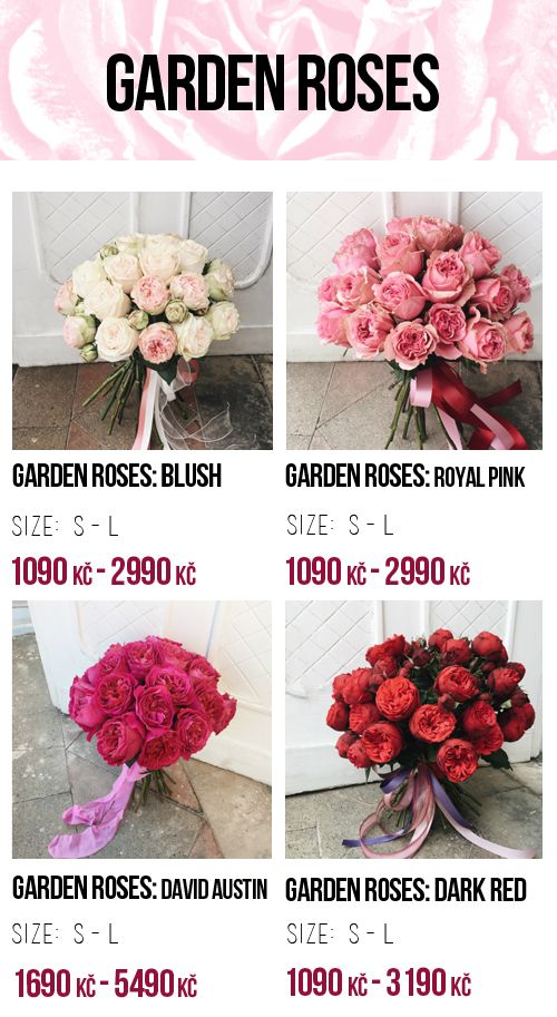 17 best COOL FLOWERS Price list images on Pinterest | Bloemen ...