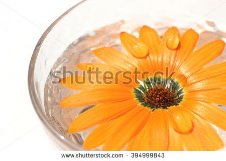 orange daisy flower in the glass of water #2 - stock photo