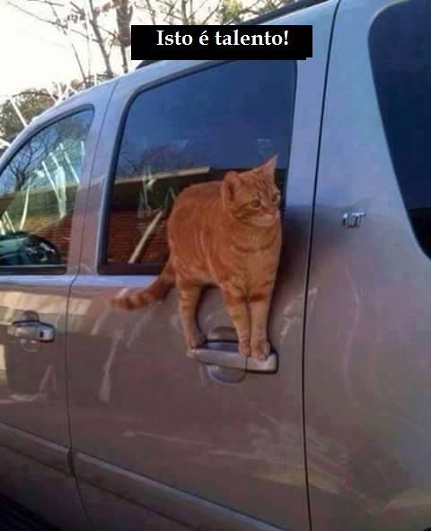 dia de gato: