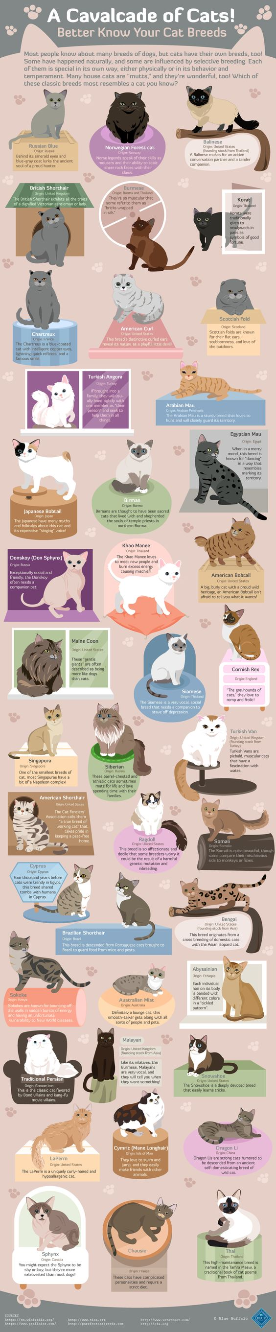 A Cavalcade of Cats! #Infographic #Animal #Cats #Pets: