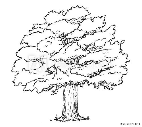 Drawing Of Oak Tree Hand Sketch Of Plant Black And White Illustration Oak Tree Drawings Tree Drawing Tree Illustration