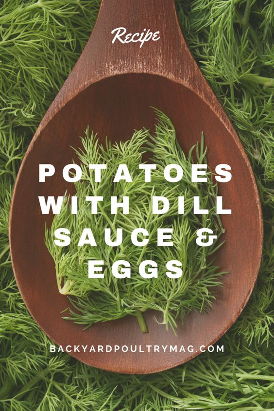Dinner tonight anyone? Here's a recipe for potatoes with dill sauce and eggs. It's a great way to use some of the season's first potatoes and onions plus backyard eggs. Yum!