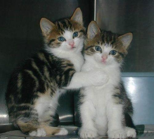 kitten goodness 6 Daily Awww: Kitty cat cuteness right here (33 photos)