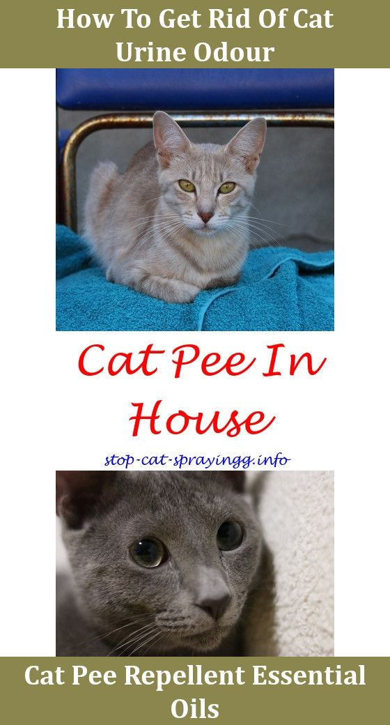Cat Pee Smell Removal Basement Cat Spray Cat Pee Smell Cat Pee