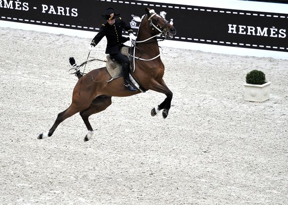 Horses fly in the Grand Palais just before the Hermès Grand Prix