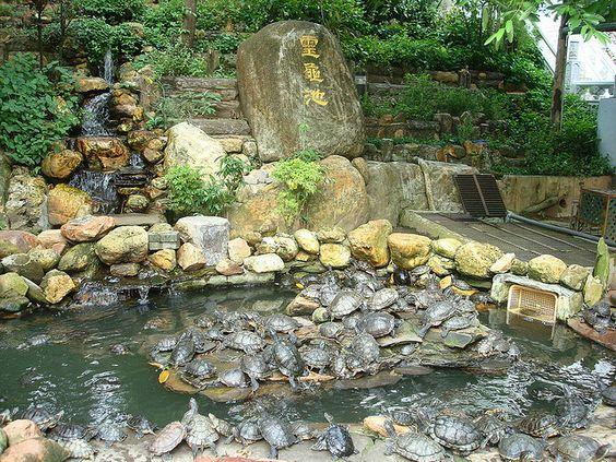explore feng shui ? fung shui and more feng shui turtles gardens