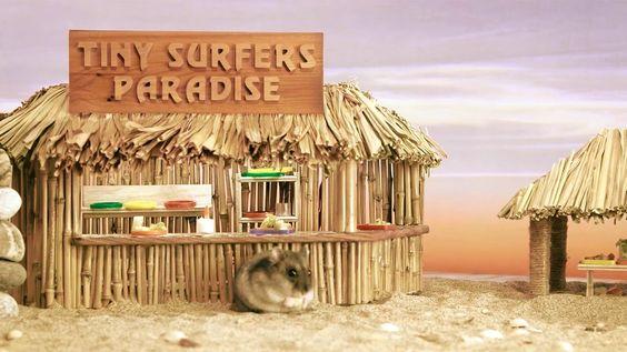 Tiny hamster visiting Hawaii ep.1