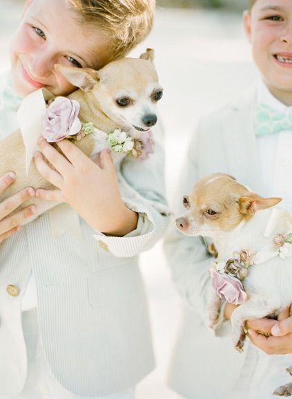 Tu mascota también hace parte de tu evento, aquí las mejores ideas para vestir a tu mascota el día de tu boda.  Síguenos en: INSTAGRAM – http://instagram.com/flaviatiendadegala TWITTER – https://twitter.com/flavianovias YOUTUBE – https://www.youtube.com/channel/UCfwfXv8UUas2jiJeZbpO7mQ PINTEREST – http://es.pinterest.com/flaviatienda/ LINKEDIN – https://www.linkedin.com/company/flavia-vestidos-de-novia FACEBOOK – https://www.facebook.com/flaviavestidosdenovia Visitanos www.flavia.com.co
