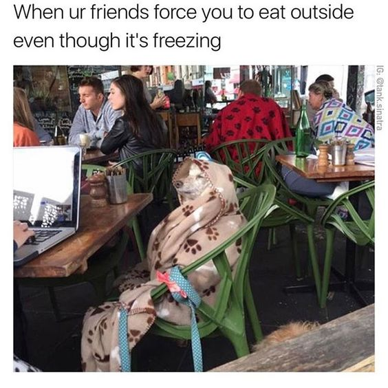 These 19 Animal Memes Will Definitely Cure Your Bad Day