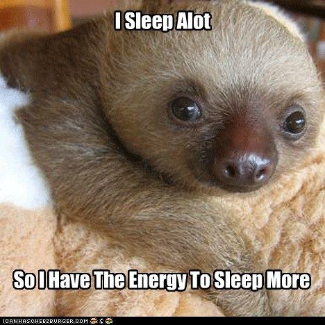 I sleep as much as this sloth...