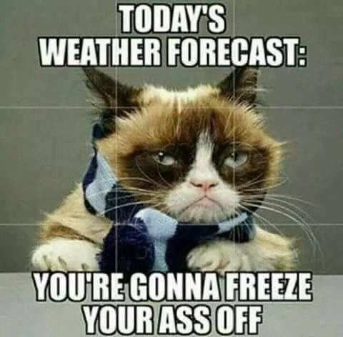 Pin By Cats Are So Cool On Grumpy Cat Funny Grumpy Cat Memes Grumpy Cat Humor Grumpy Cat