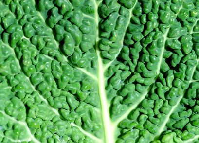 I LOVE TURNIP GREENS, COLLARDS, MUSTARD GREENS, KALE, SPINACH AND LETTUCE.  Greens are highly nutritious foods that offer a variety of health benefits. They rich in vitamins, minerals and antioxidants and can also minimize your risk of developing certain diseases. A ...