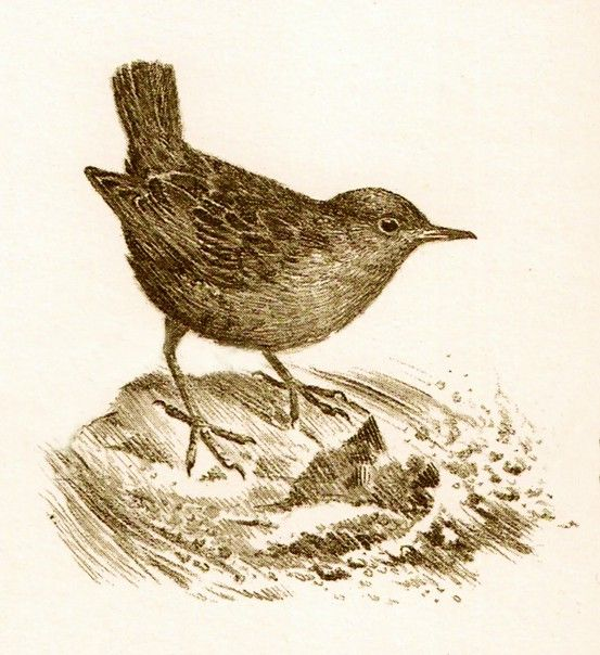 Bird image, with and without background