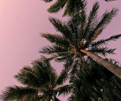 ✞ Linnea ✞ | via Tumblr