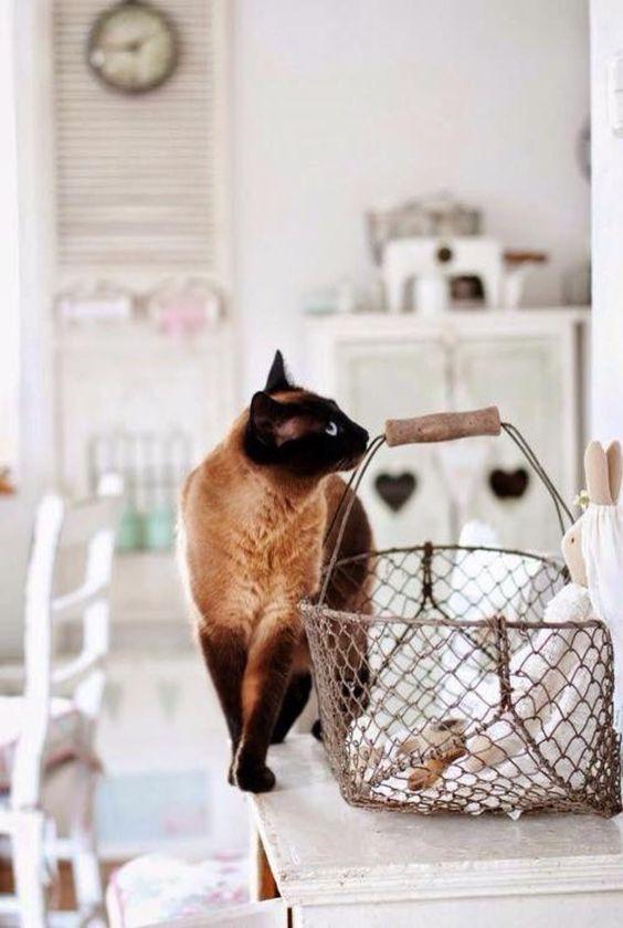 Cat worl