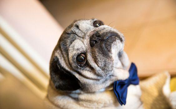 Invitati a quattro zampe: le 30 foto più belle che ritraggono gli animali ad un…