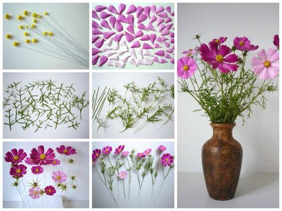 Cosmos bipinnatus - Pillangóvirág https://www.facebook.com/Csodavirag