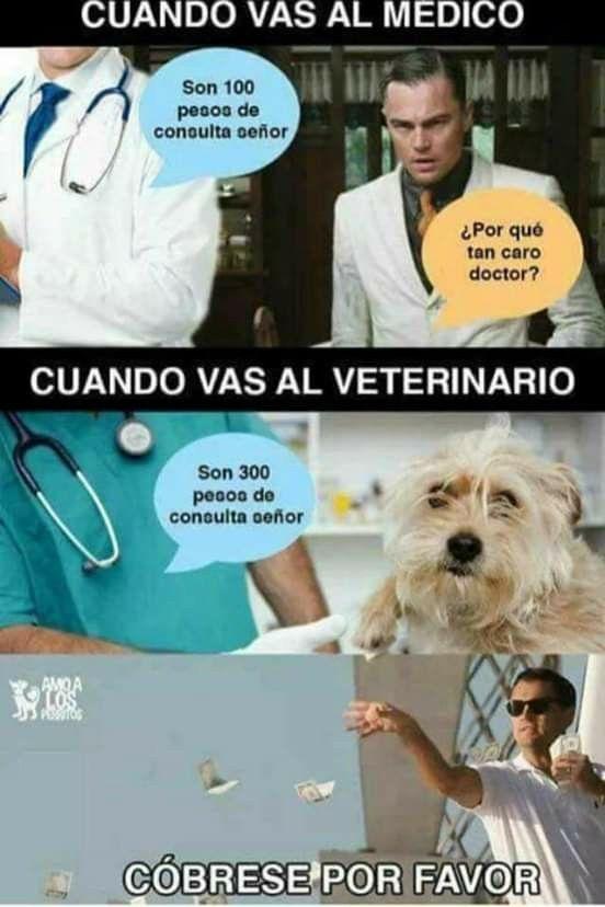 Cuando Vas Al Veterinario Chistes Medicos Veterinario Medico Humor Gracioso