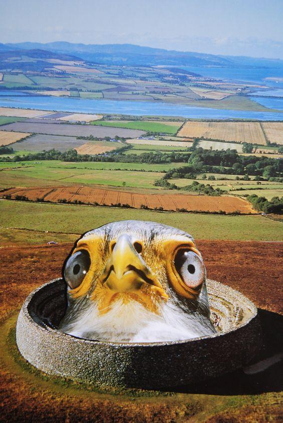 Little Birdy, www.turckart.blogspot.com