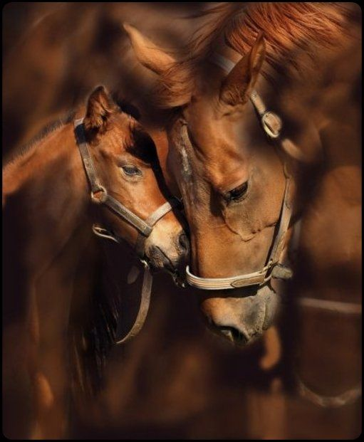 """. . . I'm sorry son.  I just don't want you hanging out with those - warm bloods.  Never forget who you are. Your a quarter horse - Only real cowboys ride quarter horses."""""""