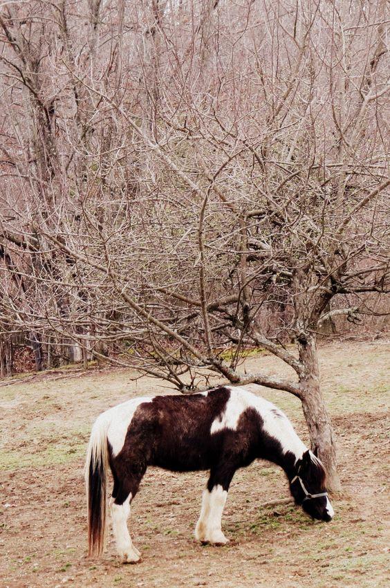 Bruce's Horse