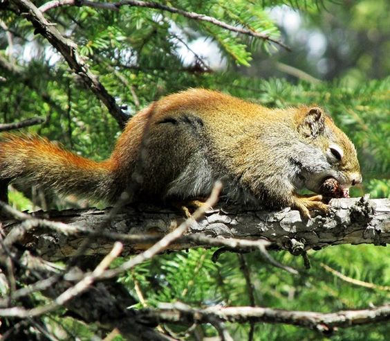 Squirrel at Middle Lake, Bow Valley Provincial Park, Alberta, Canada