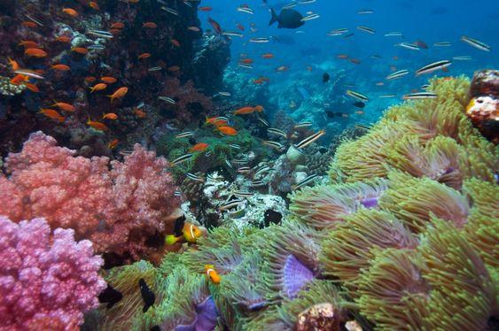 Go scuba diving somewhere beautiful