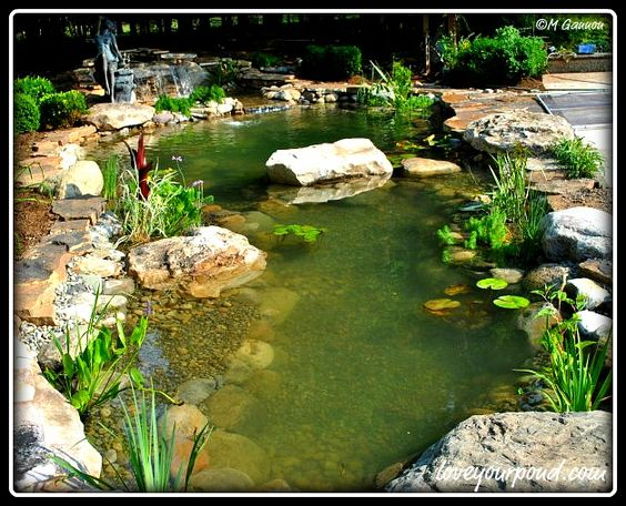 Water garden pond installation with large floating rock for Backyard pond installation