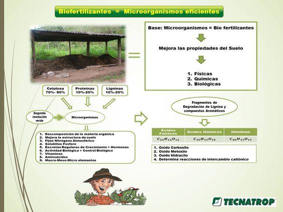 Asociación de Cafés Especiales de Honduras ACEH/SCAH