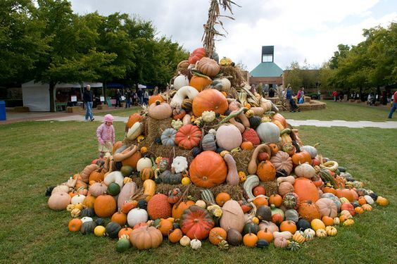 Fall Bulb Festival at Chicago Botanic Garden... where else can you see a gourd pyramid in Chicagoland?