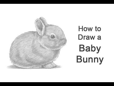 Learn How To Draw A Baby Bunny Rabbit With This How To Video And Step By Step Drawing Instructions Babybunn Rabbit Drawing Baby Bunnies Drawing Bunny Drawing
