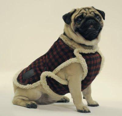 Одежда для собак Советы по выбору » Библиотека Современника - Онлайн библиотека. Читать книги, журналы онлайн, скачать книги, журналы txt, doc, pdf, fb2, zip