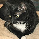 Lucky Lady--I am a pretty, tuxedo girl. I can be shy when you first meet me, but give me some time and my true colors will shine. I am a sweet girl that...