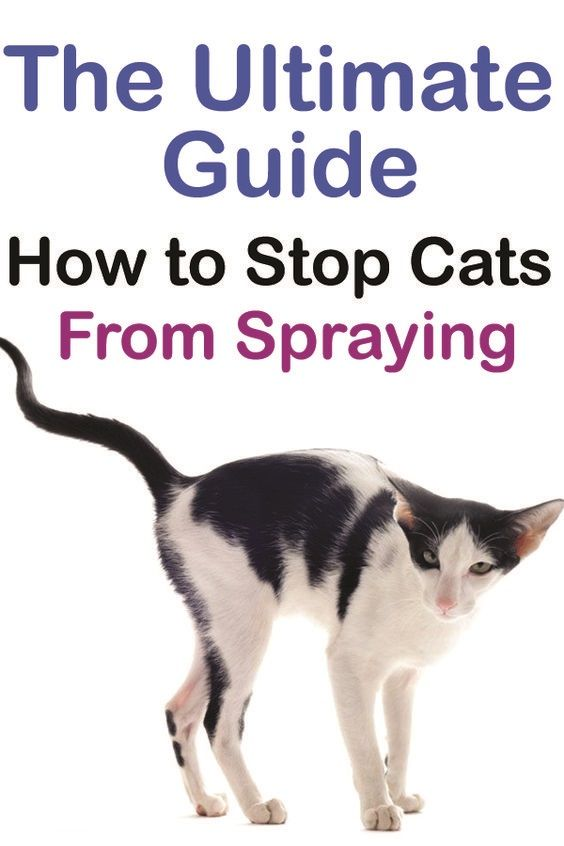 Stop Your Cat Spraying And Soiling In The House Cat Spray Cat Spray Smell Male Cat Spraying