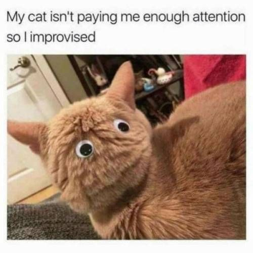 40 Pics And Memes That Will Make You Laugh Best Cat Memes Funny Animal Pictures Funny Cat Videos