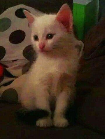 Mia ❤  #cat #kitten #kittenlove
