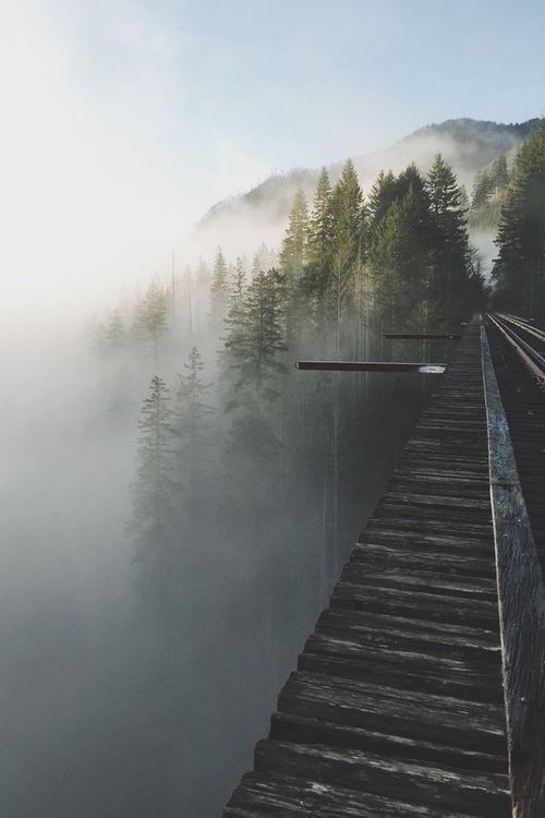 Path | 道路 | Chemin | путь | Sentiero | Camino | Dōro | Pasaje | проезд | Fog takeover. | By Peterson Lee