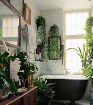 dream bathroom. hanging houseplants: ivy + cordatum + fiddle leaf fig plant + ficus