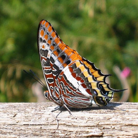 Exotic Butterfly Gallery | Exotic butterfly | Flickr - Photo Sharing!