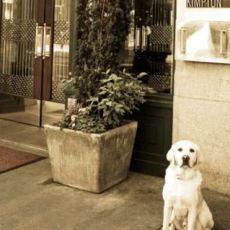 Dog Friendly Hotel In Portland Or Monaco A Kimpton