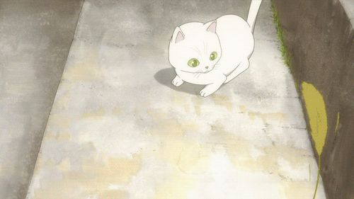 Awww... Makoto playing with the abnormally tiny kitten. :)<--- Is that a reference to the abridged? :D