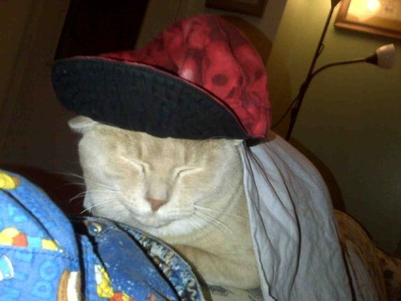 my kitty in a hat lol so cute jessy