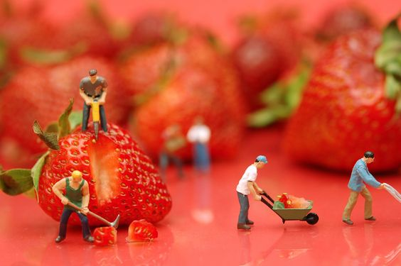 Berry Hard Work | Flickr - Photo Sharing!