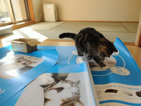 Японский кот Maru =(^_^)= http://miuki.info/2010/12/yaponskij-kot-maru/
