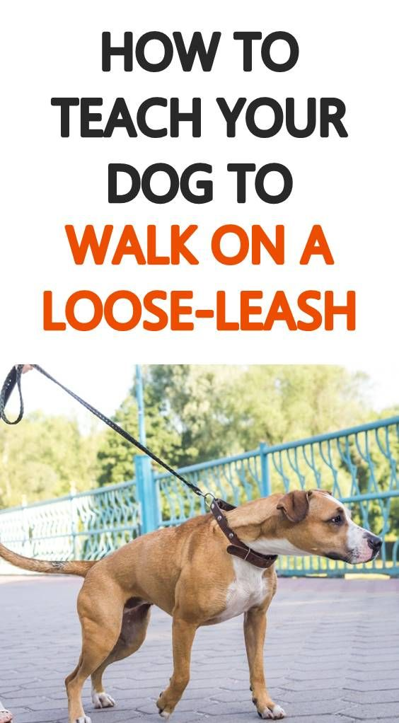 Loose Leash Walking Is Possible For Any Dog Learn How To Get Your