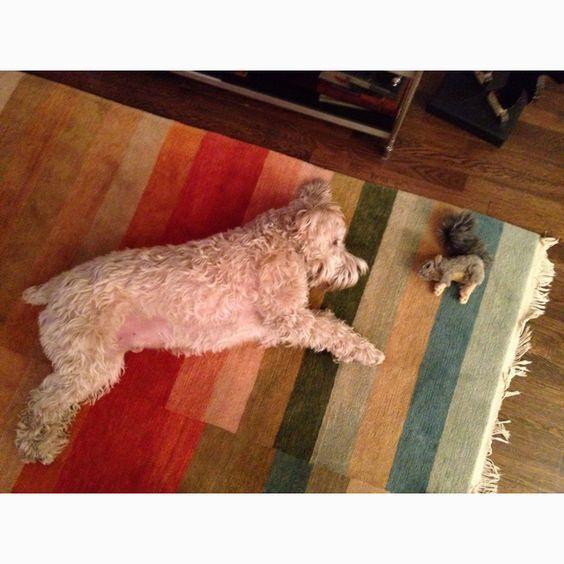 Toby + squirrel