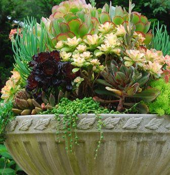 Nice succulent combo.